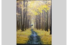 - Custom Wall Mural - Image360 - Woodbury